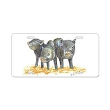 Pot bellied pigs three Aluminum License Plate