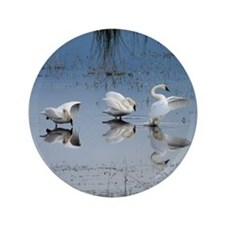 """Dance of the Trumpeter Swans 3.5"""" Button"""
