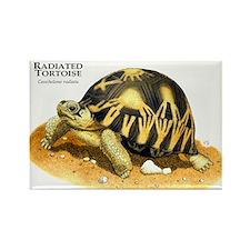 Radiated Tortoise Rectangle Magnet