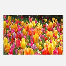Colorful Tulip Postcards (Package of 8)