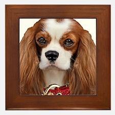 Cavalier King Charles Portrait Framed Tile