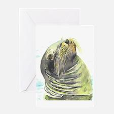 Galapagos Sea Lion Greeting Cards