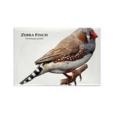 Zebra Finch Rectangle Magnet