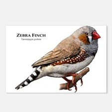 Zebra Finch Postcards (Package of 8)