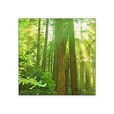 "Giant redwoods Square Sticker 3"" x 3"""