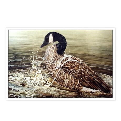 Canada Goose Postcards (Package of 8)