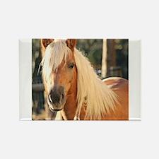 Haflinger Horse Magnets