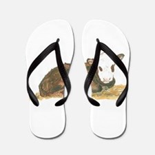 calf lying down Flip Flops