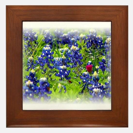 6415 Field of Bluebonnets Framed Tile