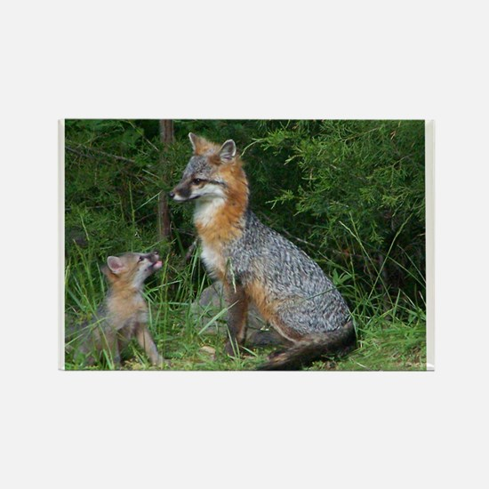 MOTHER RED FOX AND BABY Magnets