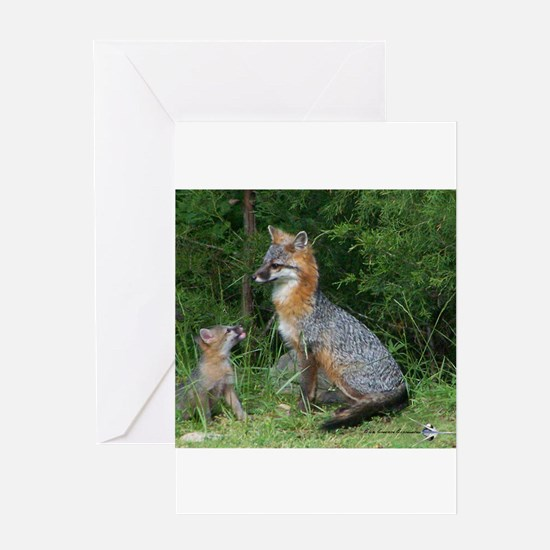 MOTHER RED FOX AND BABY Greeting Cards