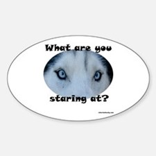 Siberian Husky Eyes What are you staring at? Stic