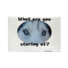 Siberian Husky Eyes What are you staring at? Rect