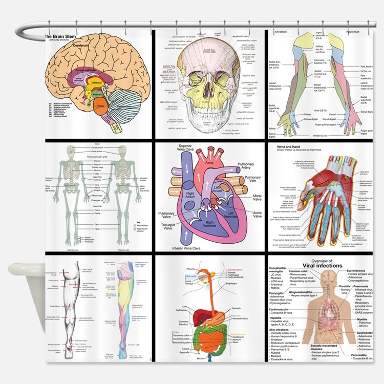 HD Wallpapers Anatomy Shower Curtain