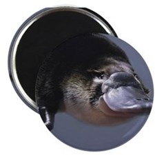 platypus Magnets