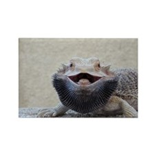 bearded dragon Magnets