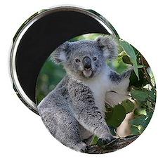Cute koala Magnets