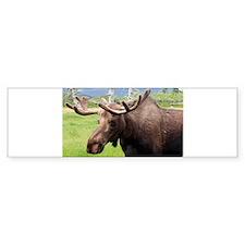 Moose Bumper Bumper Sticker