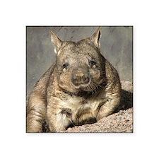 "wombat Square Sticker 3"" x 3"""