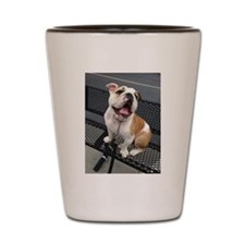 Bulldog Smile Shot Glass