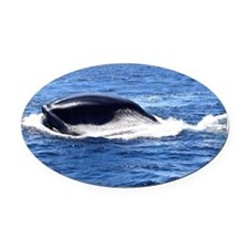 Blue Whale 1 Oval Car Magnet