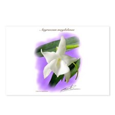 Magdalena Postcards (Package of 8)
