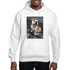Bulldog Smile Hoodie