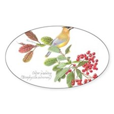 Cedar Waxwing and berries Decal