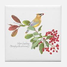 Cedar Waxwing And Berries Tile Coaster