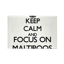 Keep calm and focus on Maltipoos Magnets