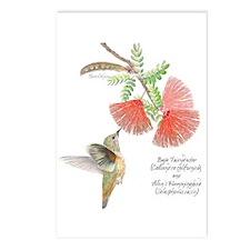 Baja Fairyduster Postcards (package Of 8)