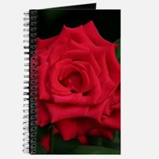 Rose, red flower in bloom Journal