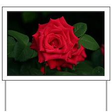Rose, red flower in bloom Yard Sign