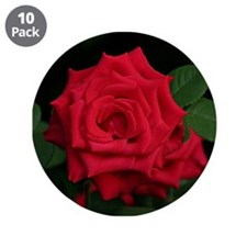 "Rose, red flower in bloom 3.5"" Button (10 pack)"
