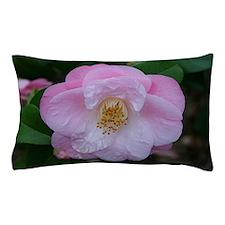 Camellia flower in bloom in garden Pillow Case