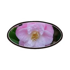 Camellia flower in bloom in garden Patches