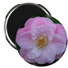 Camellia flower in bloo Magnets