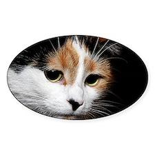 Calico Cat Decal