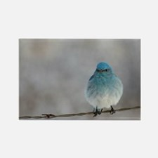 Mountain Bluebird Magnets