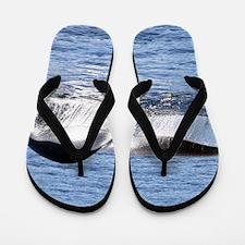 Blue Whale Flukes Flip Flops