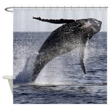 Humpback Breaches Shower Curtain