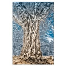 Infrared: Tree with Vines Wall Art Poster