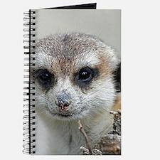 Meerkat001 Journal