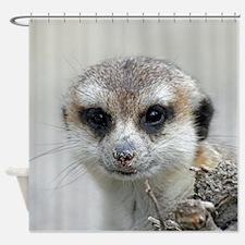 Meerkat001 Shower Curtain