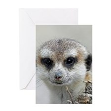 Meerkat001 Greeting Cards