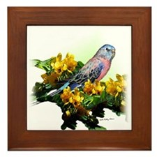 Bourke Parakeet - Framed Tile