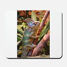 colorful chameleon Mousepad