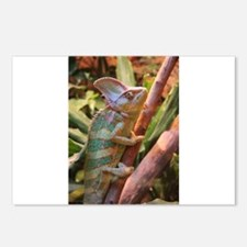 colorful chameleon Postcards (Package of 8)