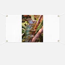 colorful chameleon Banner