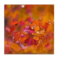 Colorful Autumn Leaves Tile Coaster